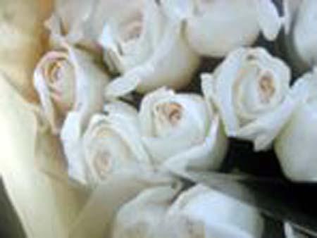 roseswhite.jpg